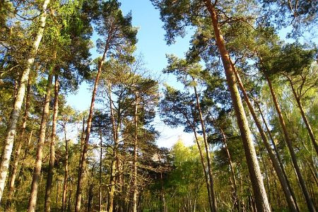 a state park filled with pine trees